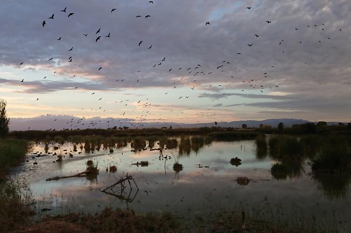 Ebro-delta Természetvédelmi Park